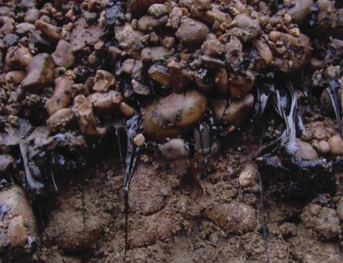 HAP et autres composés aromatiques polycycliques (p.ex. oxy-HAP) – Quelle évolution à long terme dans le milieu souterrain?